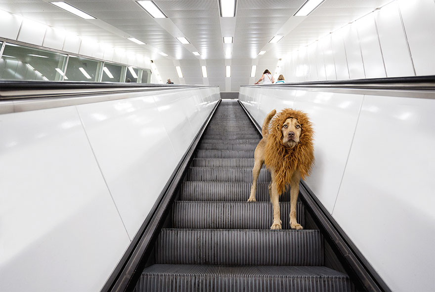 stray-dog-big-city-lion-grossstadtlowe-julia-marie-werner-2